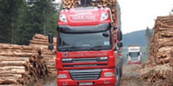 Woodland forestry
