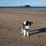 Rio at North Berwick