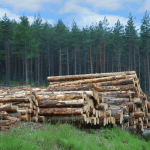 Scottish timber