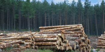 Scottish timber